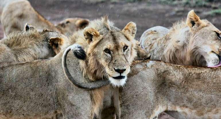 Safari en Tanzanie : Se préparer à visiter la savane africaine