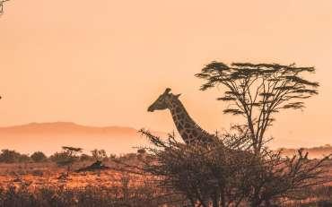Quel budget prévoir pour un Safari en Afrique ?
